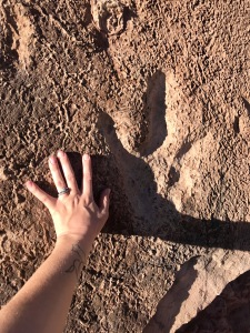 Dinosaur Tracks in Moab Utah
